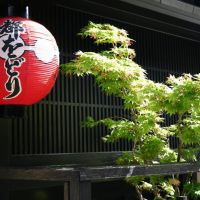 The best geisha tour in Kyoto